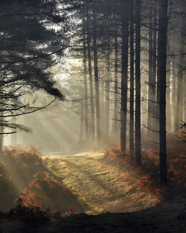 Forest Dawn - Image 0