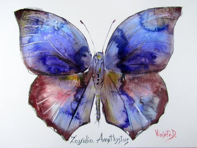 Zeuxidia Amethystus - Image 0