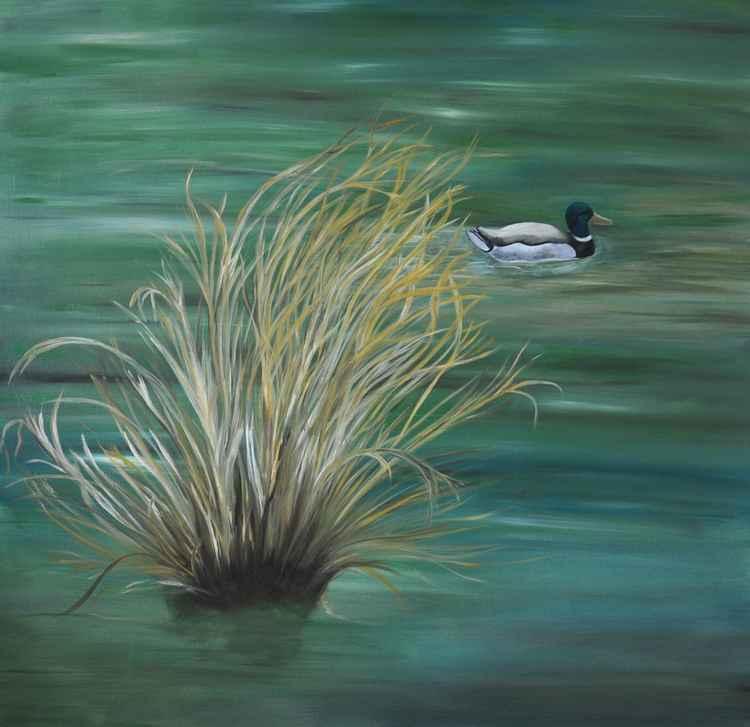 THE LULL (Mallard on water) -