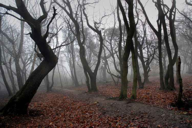 Foggy Day on Hampstead Heath London