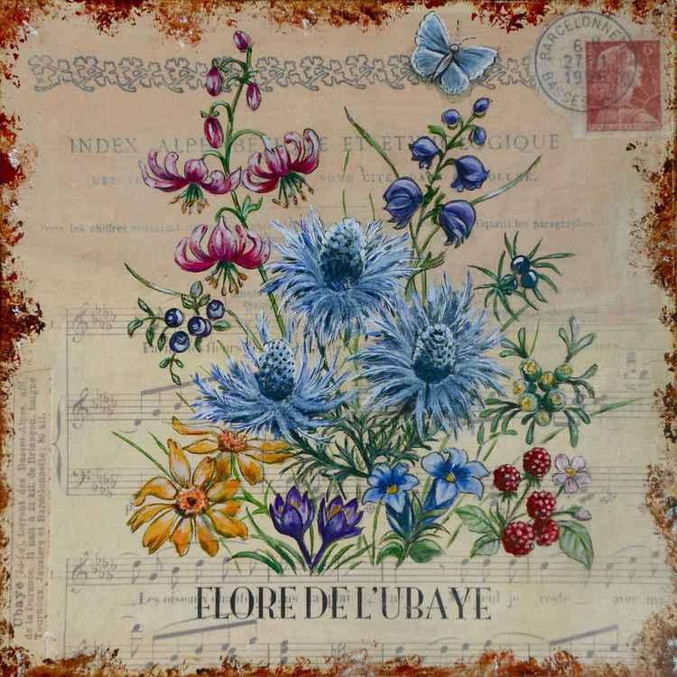 Flore de l'Ubaye -