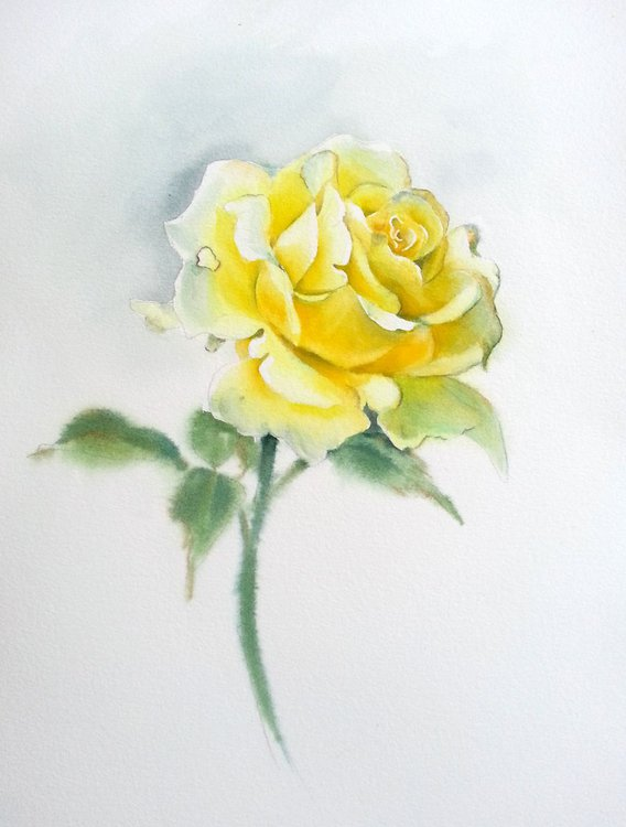 Yellow rose flower yellow rose watercolour flower wall decor floral watercolor painting floral flower valentines day yellow rose flower yellow rose watercolour flower wall decor floral watercolor painting mightylinksfo