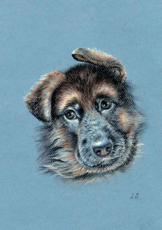 "Original pastel drawing ""German Shepherd"" Sketch -"