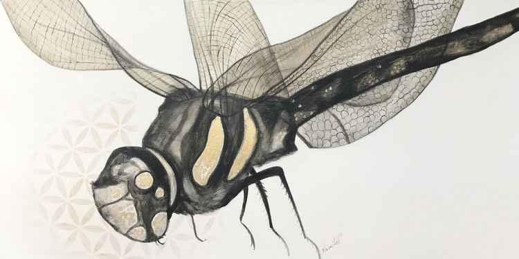 Dragonflying-bye -