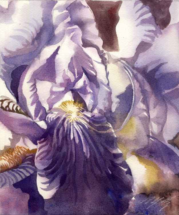 Iris watercolor -