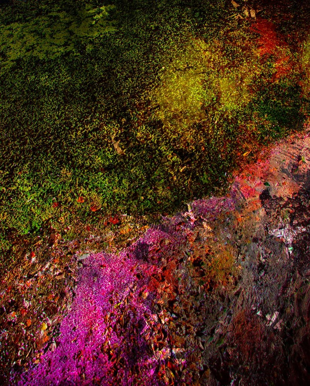 Ecosystem I - Image 0