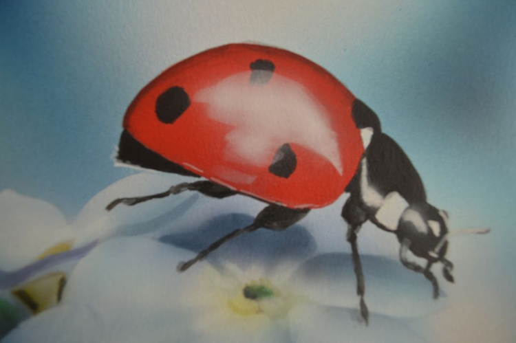 Forget me not Ladybird - Image 0
