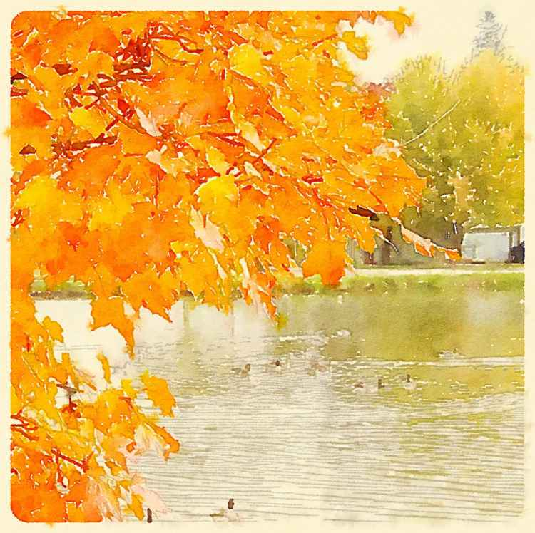 Fall Foliage by a Pond -
