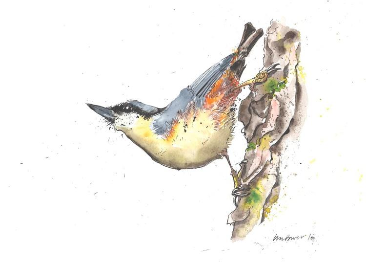 Nuthatch - Daily Bird #30 - Image 0