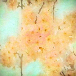 Gold blossom by Nadia  Attura