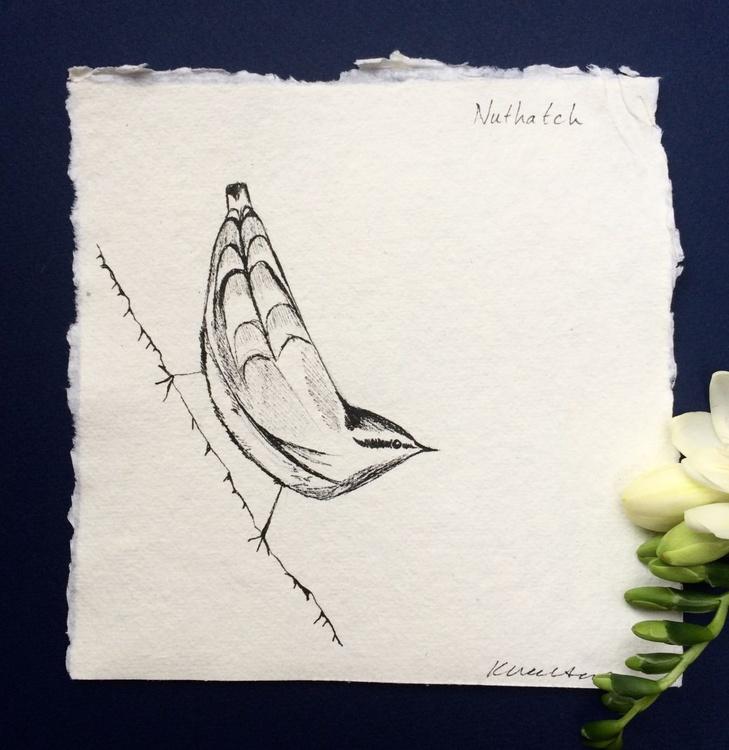 Nuthatch Ink Sketch - Image 0
