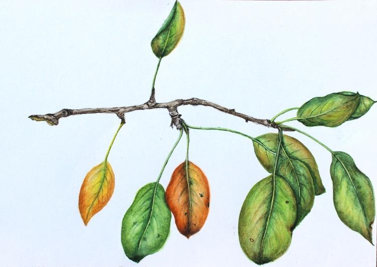 Autumn colors - Image 0