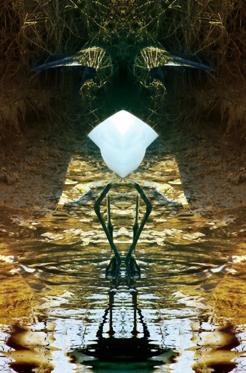 "Two Herons - Symmetry Series - 20"" x 30"" Giclée Photorag 308 - Image 0"