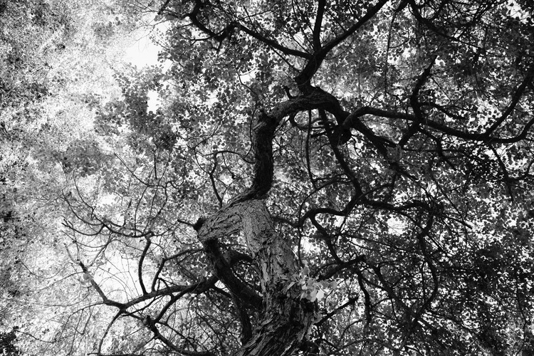 """""""The Tree Top"""" - Image 0"""
