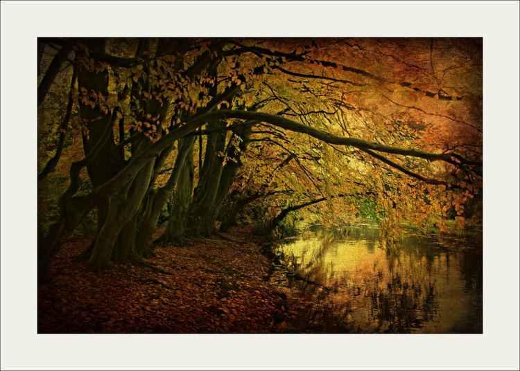Autumns Umbrella -