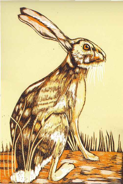 Yellow Hare -