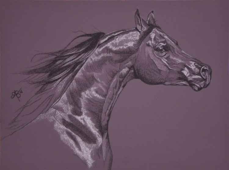 Aubergine Arabian II