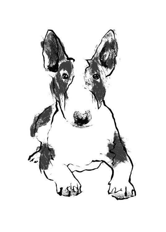 Bull Terrier - Image 0