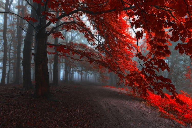 The road of Seraphines - Image 0