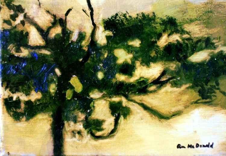 Texas Cypress at Sunset