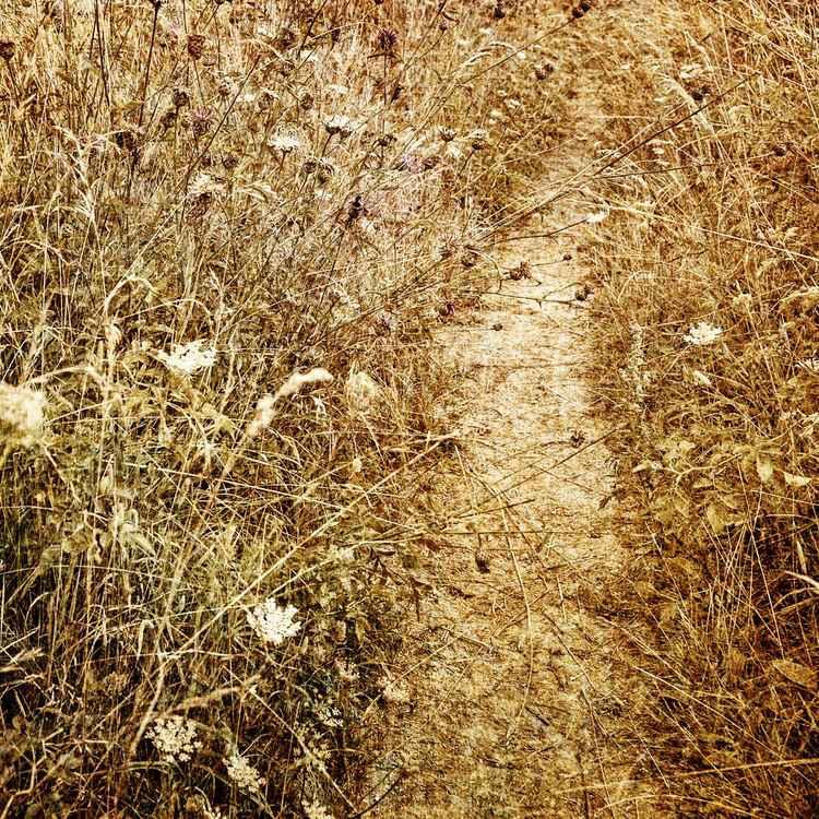 Pathway -