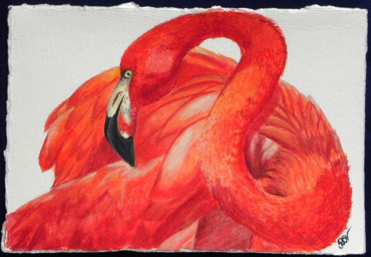 Flamingo Folly 2 - Image 0