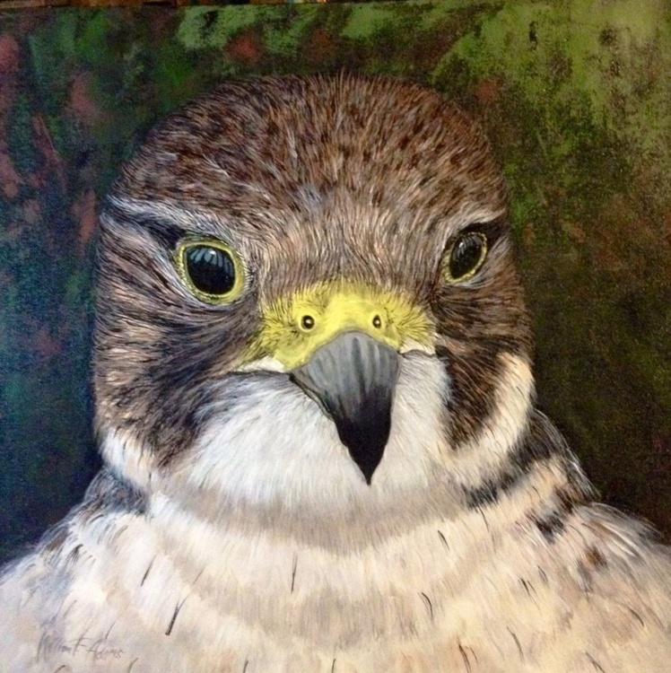 """English Falcon"" - Image 0"
