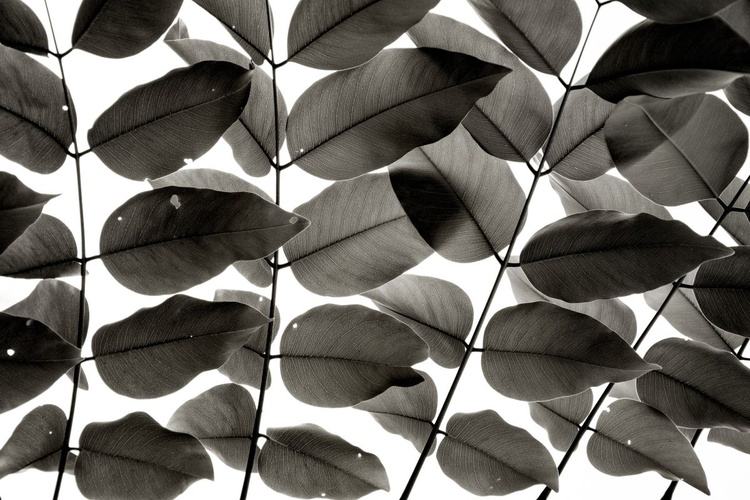 """""""Branches and Leaves"""" - Image 0"""