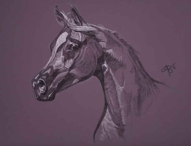 Aubergine Arabian I -