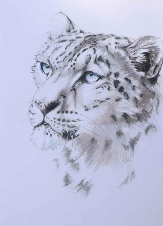 'Snow Leopard 3'