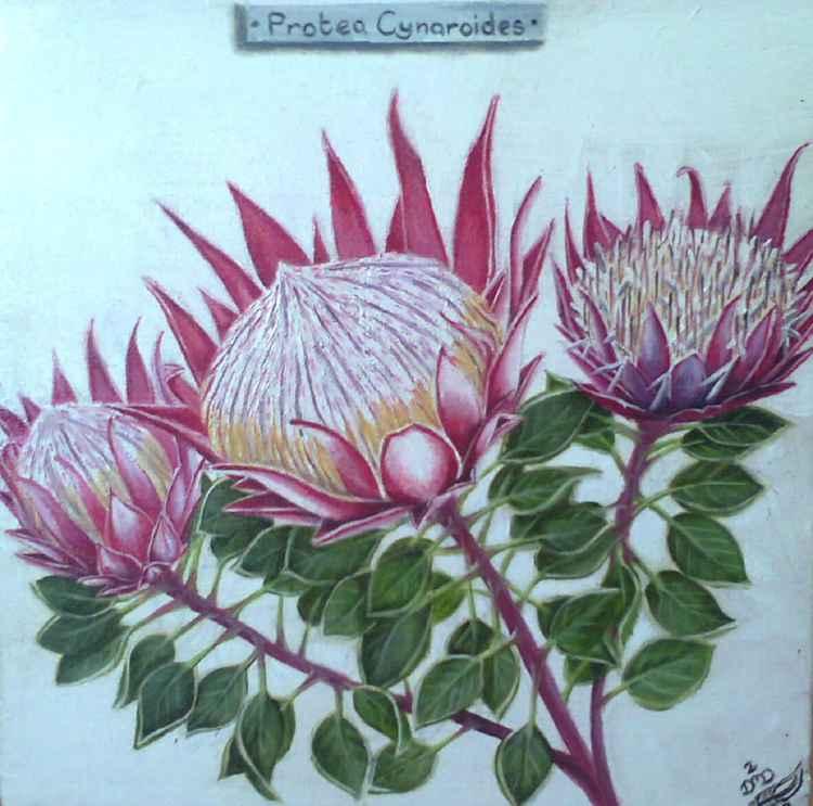 Protea Cynaroides -