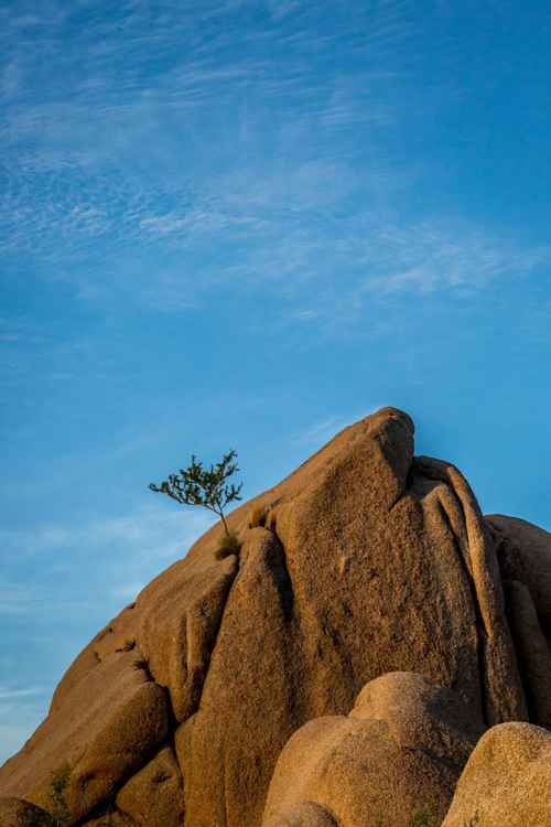 Lone Mountain Tree -