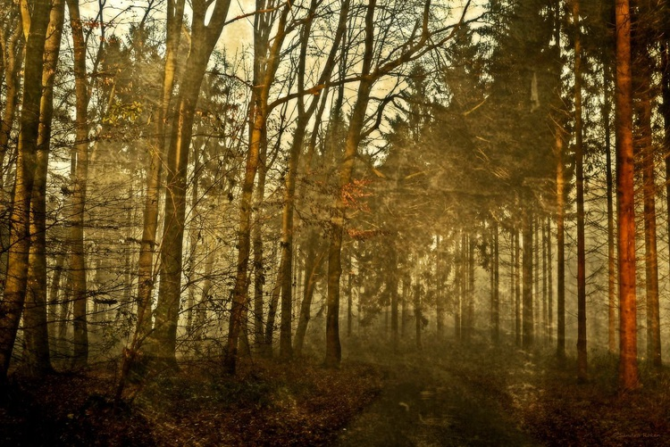 A Walk in the Woods - Canvas 75 x 50 cm - Image 0