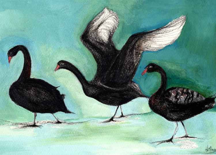 Black Swans -