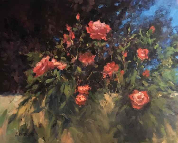 Garden Roses -