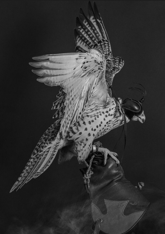 Falcon #1 - Image 0