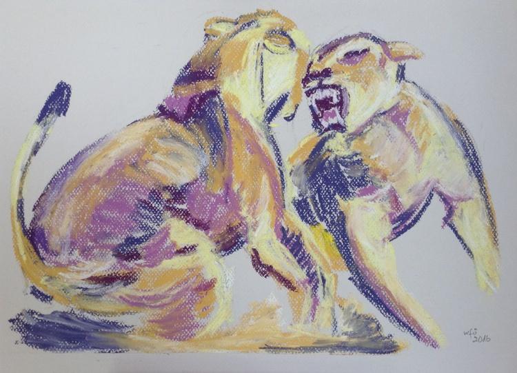Fighting lionesses - Image 0