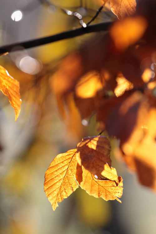autumn leaves -
