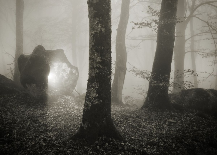 Mistery in the sacred wood - Image 0