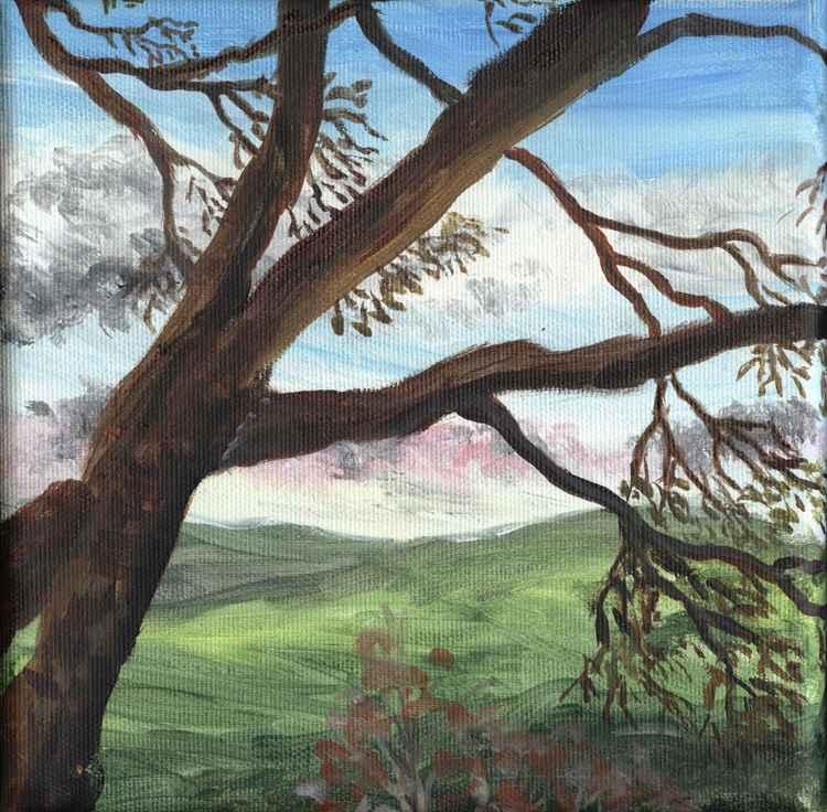 sycamore tree just budding