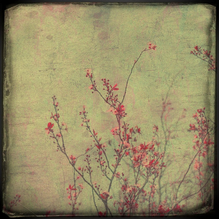 Pink blossom - Image 0