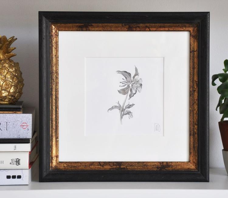 Original drawing of an aquilegia flower - Image 0