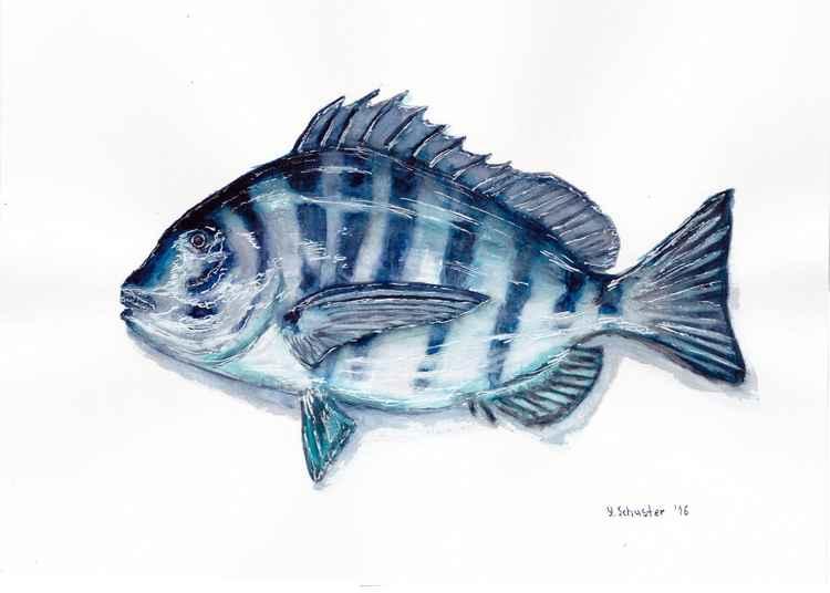 Fish N1 -