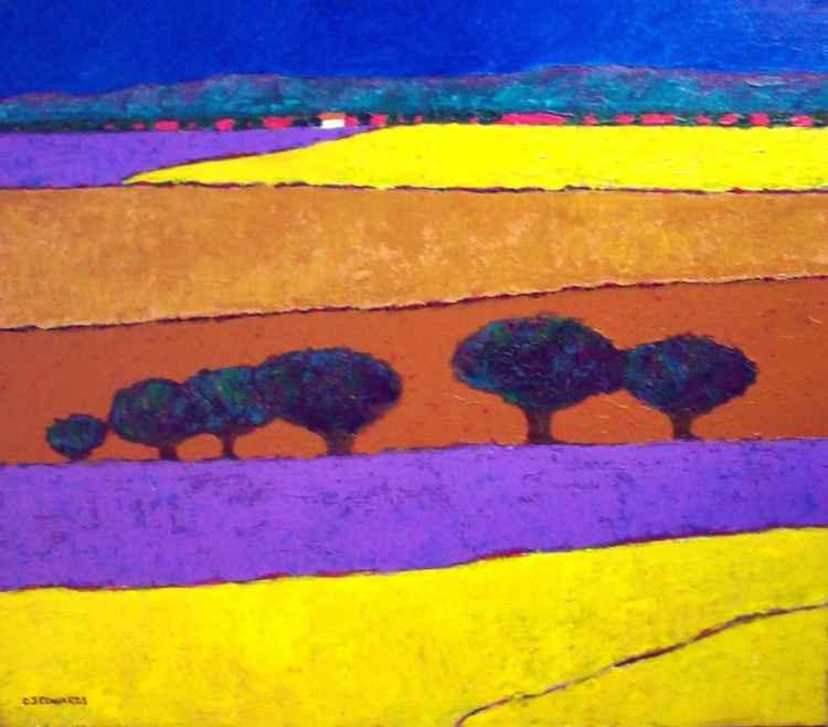 Lavender fields -