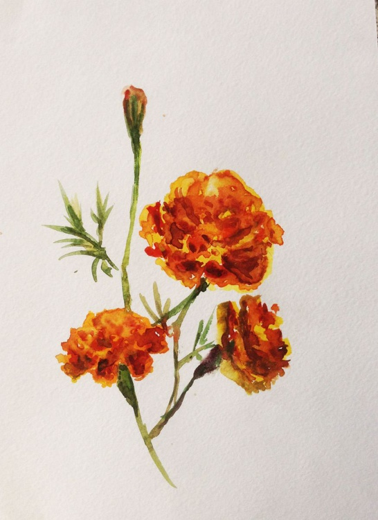 orange flowers - Image 0