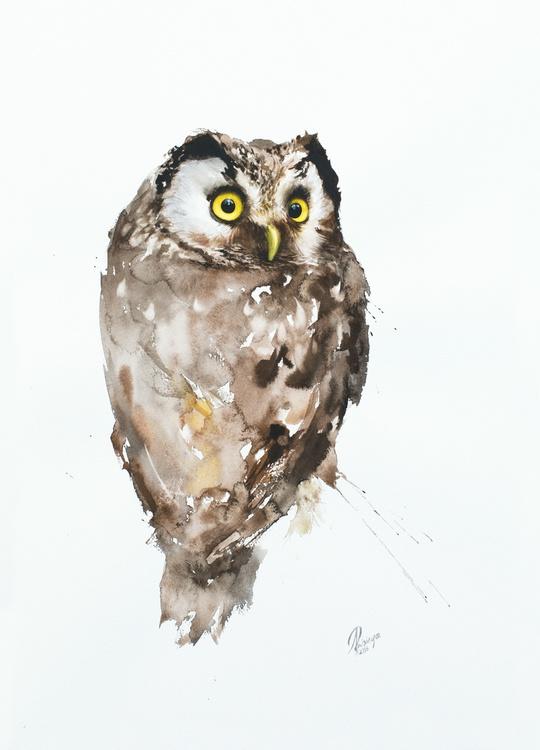 Boreal Owl (Aegolius funereus) - Image 0