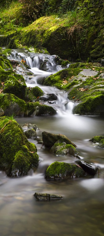 A River Runs Through It - Limited Edition Print - Image 0