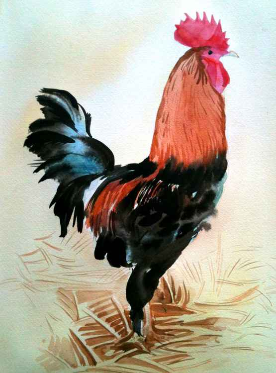 Rooster in the barn -
