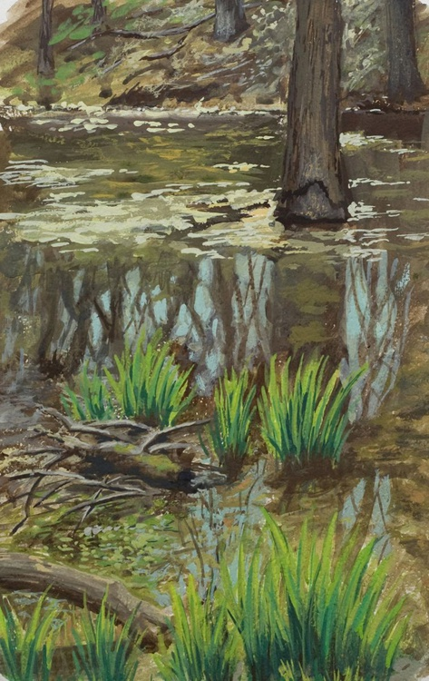Linne Woods wetland - Image 0