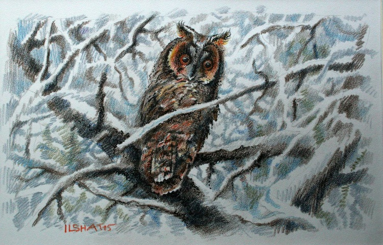 Owl. - Image 0